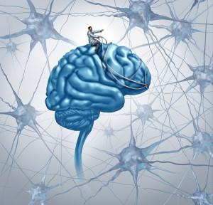 hormones and your brain